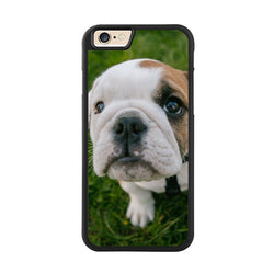 White Half Tan English Bulldog Puppy Looking Grass Phone Case for iPhone