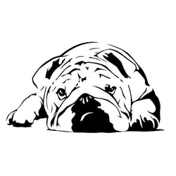 Sad English Bulldog Laying Down Sticker