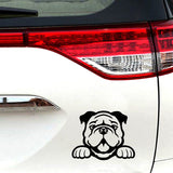 Happy English Bulldog Looking Over Outline Sticker