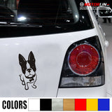 Boston Terrier Bone Collar Decal Sticker