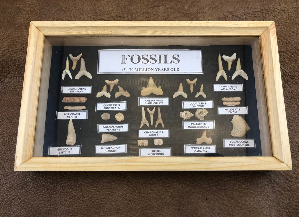 Marine Fossil Box Collection