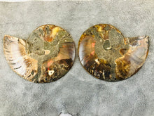 Sliced Ammonite Fossil - 295 grams