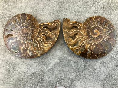 Sliced Ammonite Fossil - 240 grams