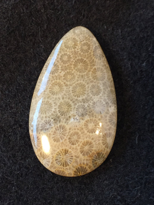 Agatized Fossil Coral - Teardrop Cabochon - front view