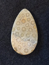 Agatized Fossil Coral - Teardrop Cabochon - back view