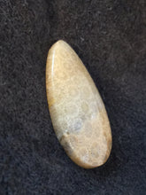 Agatized Fossil Coral - Teardrop Cabochon - side view