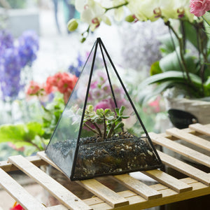 Pyramid Terrarium for Succulents, Bonsai, Air Plants or Candles