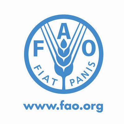 FAO document on edible insects