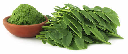 Moringa high in proteins
