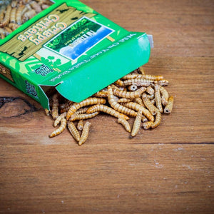 Bush Grub - Barbecue Flavour Mealworms