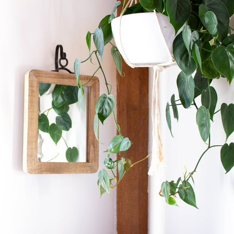 https://purplerosehome.com/products/kelsey-wood-hanging-mirror-in-2-sizes?variant=14932022722605