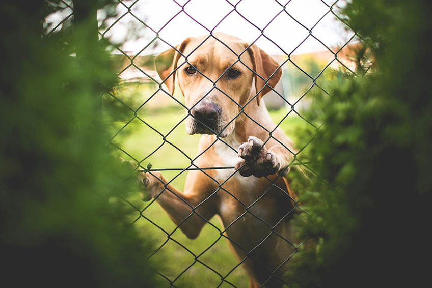 6 reasons to adopt a shelter dog
