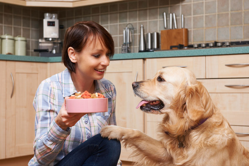 Food for dogs: What to completely avoid