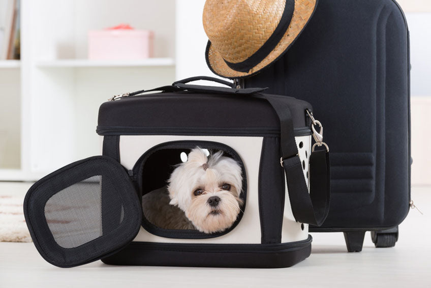 14 recommendations for traveling peacefully with your dog
