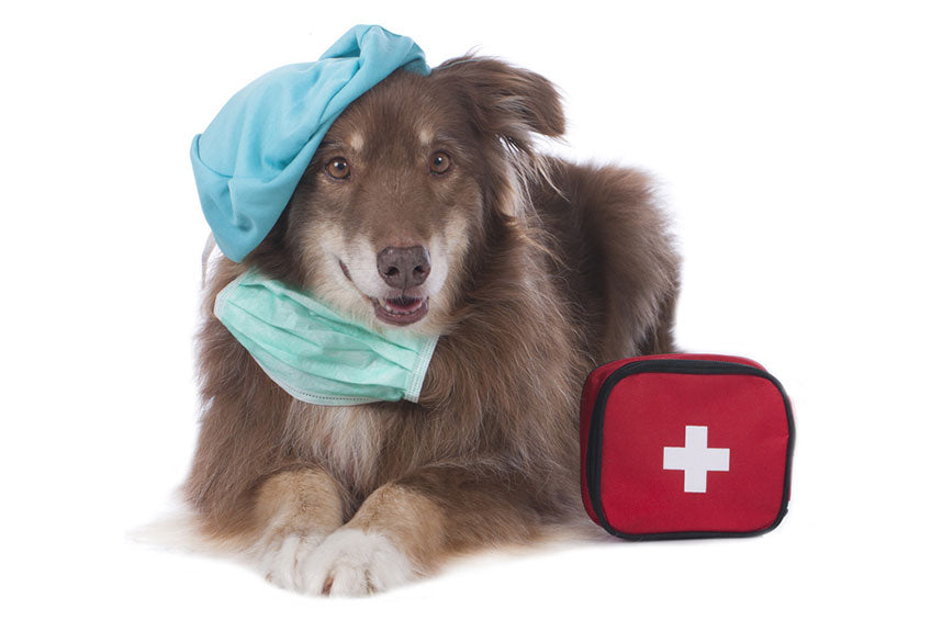 Prepare your dog to surgery