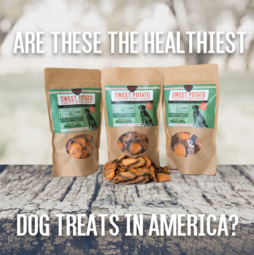 Are sweet potato dog treats the healthiest dog treats in America?