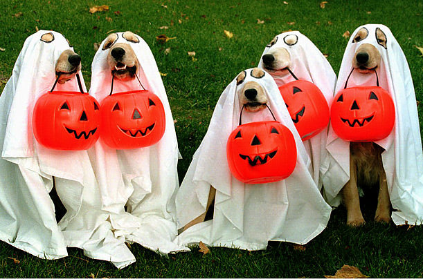 DIY Dog Costume Tips for Halloween