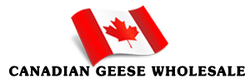 CanadianGeeseWholesale