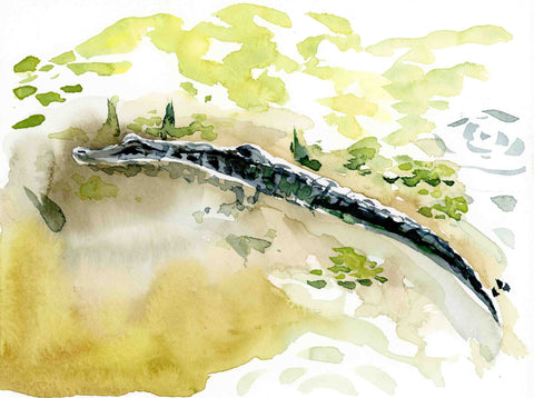 Alligator watercolor print