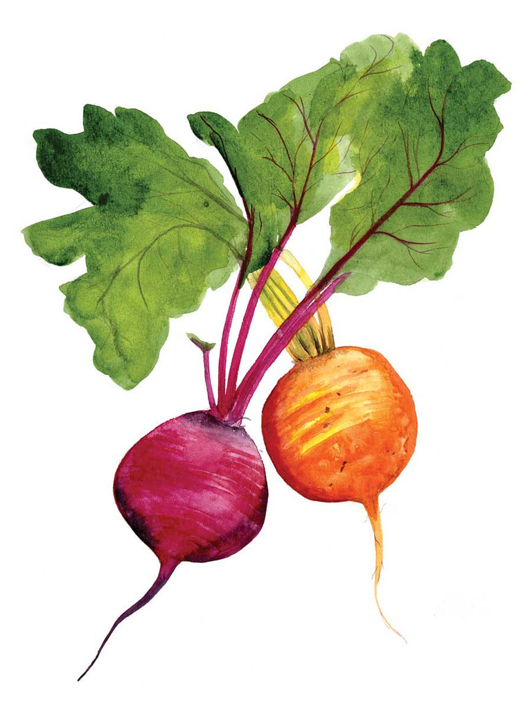 Beets watercolor print