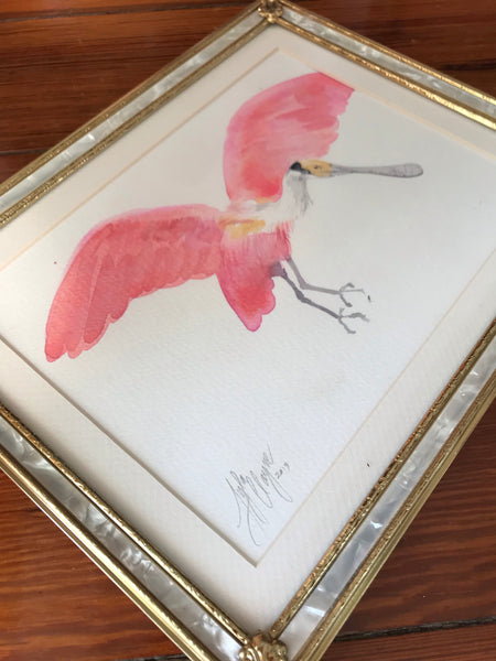 Roseate Spoonbill study