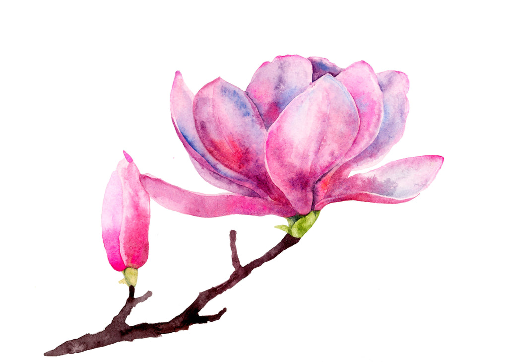 Japanese Magnolia watercolor painting