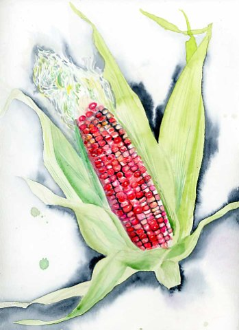 Pink Corn watercolor print
