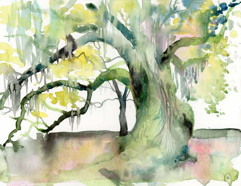 Tree of Life - Audubon Park - New Orleans print