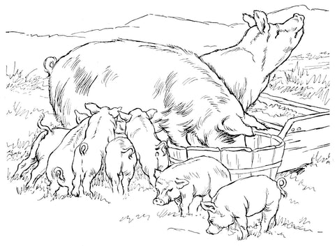 The nursing sow will rob heavily from her own body if she must, and while some thinning is to be expected, she must always be maintained in a weight-gaining condition