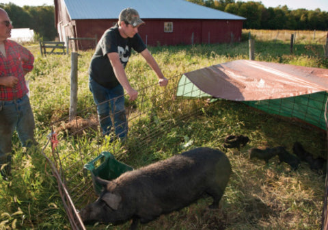 Our pastured pig infrastructure is simple, inexpensive, and mobile.