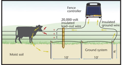 This depicts the current flow from the fencer to the ground rods, back to  the cow, then to the fence.