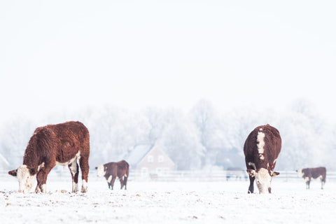 Winter can be the time that is the hardest on cattle.