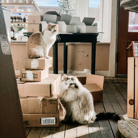 Shop Kitties