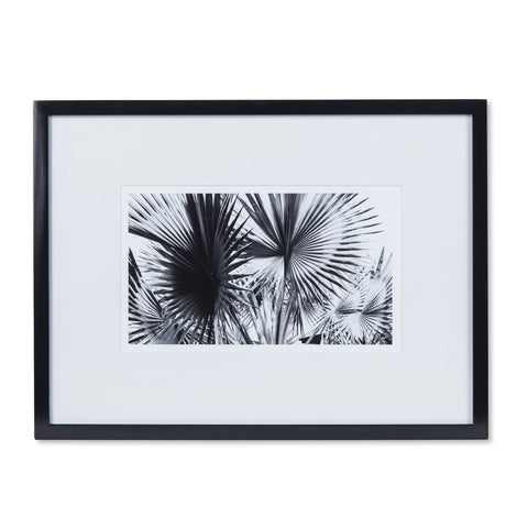 Black & White Palm Leaves - A