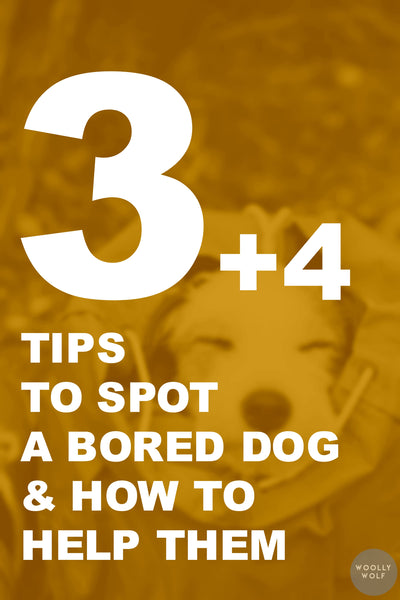 3+4 Tips to Spot a Bored Dog & How to Help Them