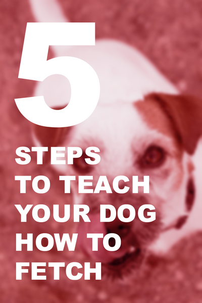 5 Steps to Teach Your Dog How to Fetch