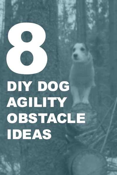8 DYI Dog Agility Obstacle Ideas