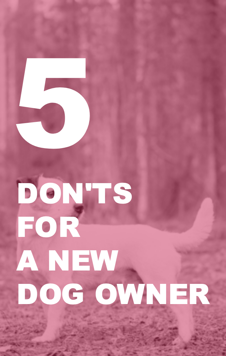 5 Don Ts For A New Puppy Owner Woolly Wolf