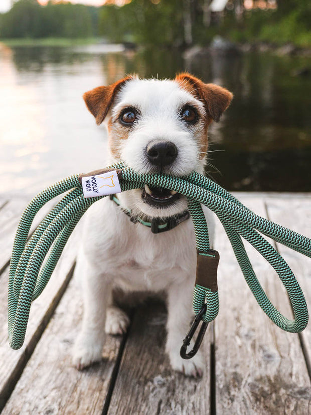 Peaks Dog Rope Leash with Jack Russel Terrier