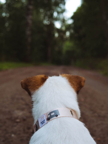 Vanlife Collar