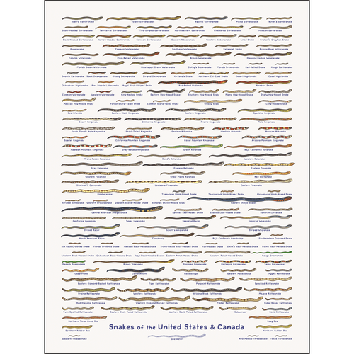 United Snakes of America Print