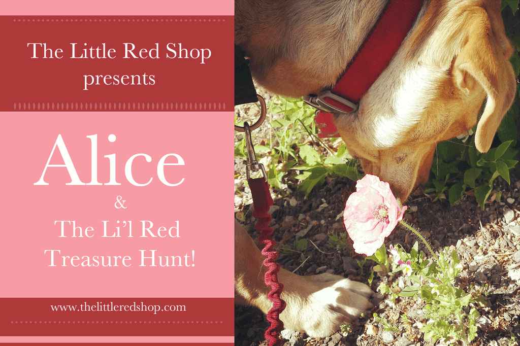 Alice and...The Li'l Red Treasure Hunt