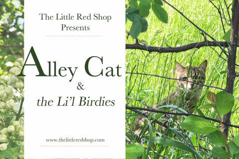 Alley Cat and...the L'il Birdies
