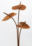 Anthurium Rust Stake - Whatever Mudgee Gifts & Homewares