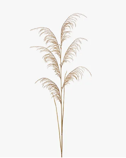 Reed Pampas Grass Spray