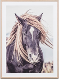 Lone Mustang Framed Print - Whatever Mudgee Gifts & Homewares