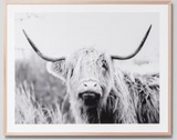Highland Bovine Grey 80x100cm - Whatever Mudgee Gifts & Homewares