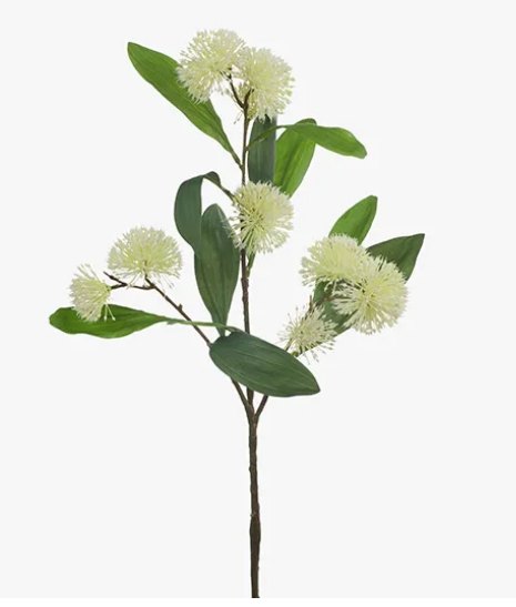 Sweet Gum Blossom - Cream