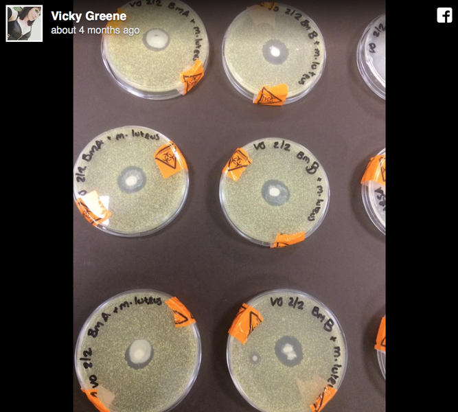 WHY THIS IMAGE OF BREAST MILK IN A PETRI DISH IS BLOWING UP THE INTERNET'S MIND