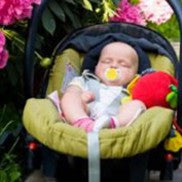 This baby is enjoying a nap outside near the peonies. Although the car seat does support her spine and head and neck while she is napping, when she is awake the straps prevent her from working her muscles to hold up her own head. Many babies spend most of